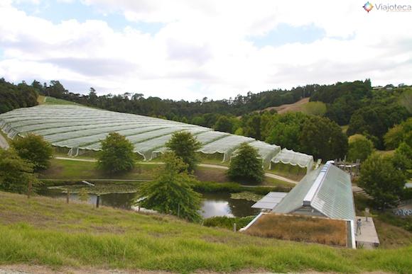 Vinicolas em Auckland- Matakana Wine Trail 34