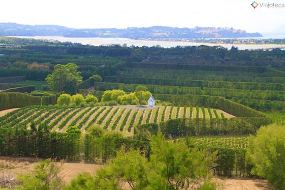 Vinicolas em Auckland- Matakana Wine Trail 9