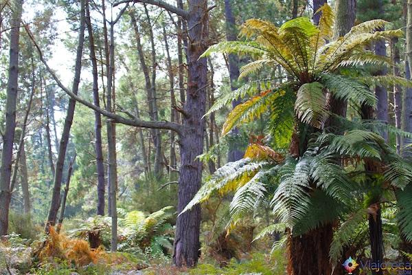 Wai - O - Tapu Rotorua Nova Zelândia 069