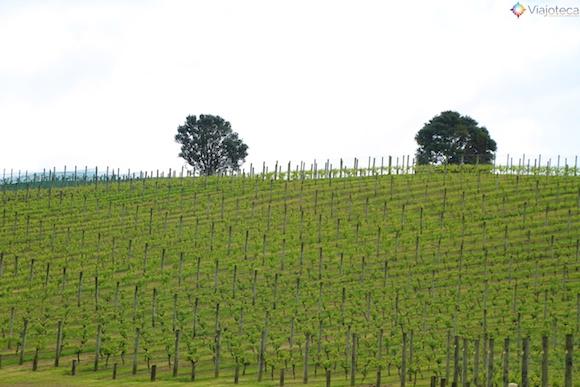 Waiheke Island - Ilha das Vinicolas em Auckland 16