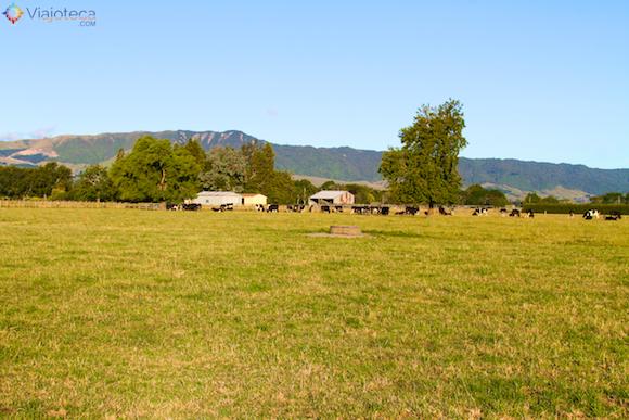 Waikato a maior região leiteira da Nova Zelândia