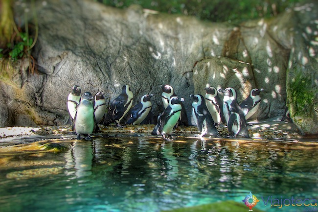no Zoológico de Singapura