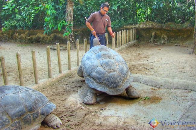 Tartarugas de Galapagos no Zoológico de Singapura
