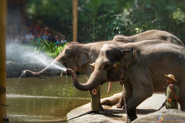 Elefantes no Zoológico de Singapura