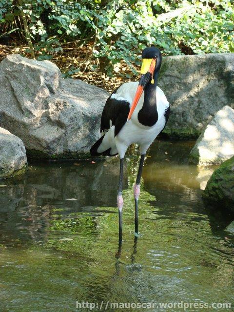 Ave Africana Jurong BirdPark
