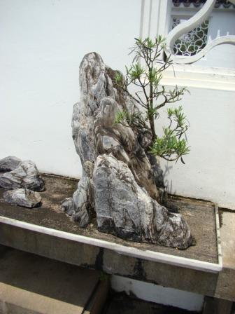 Bonsai nas Pedras