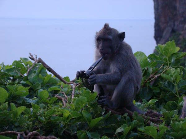 Macacos Malditos