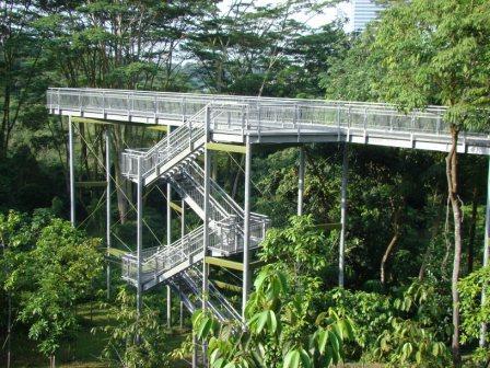Escada Acesso Trilha na Floresta