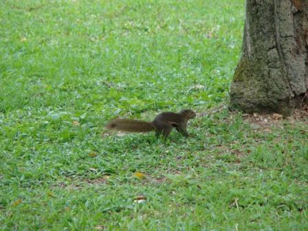 Esquilo Chinese Garden