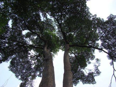 Floresta Singapura