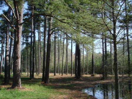 Floresta em Delaware
