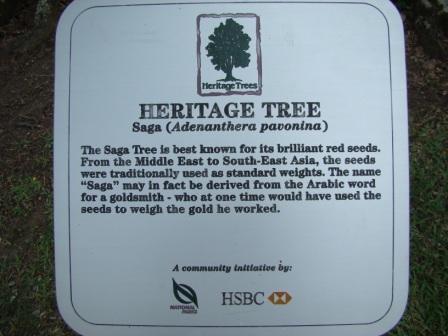 Heritage Tree Singapore