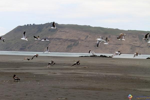 Praias costa Oeste Auckland