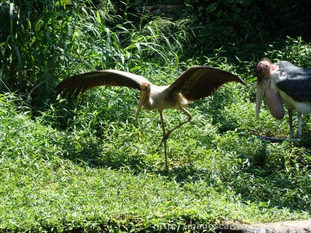 Ioga Jurong BirdPark