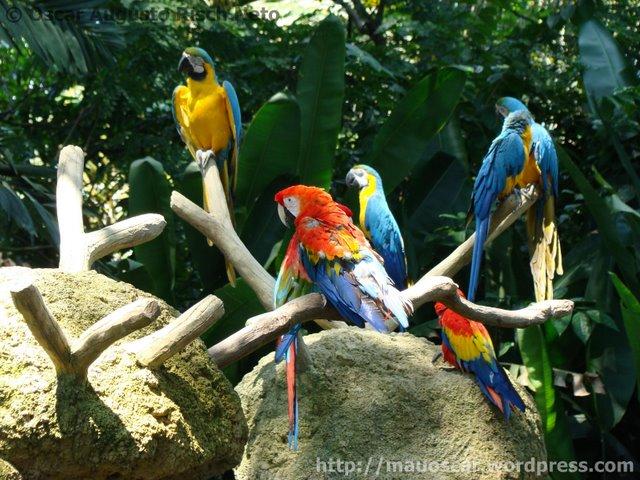 Jurong BirdPark  (54)