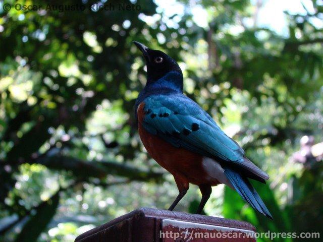 Jurong BirdPark  Africano