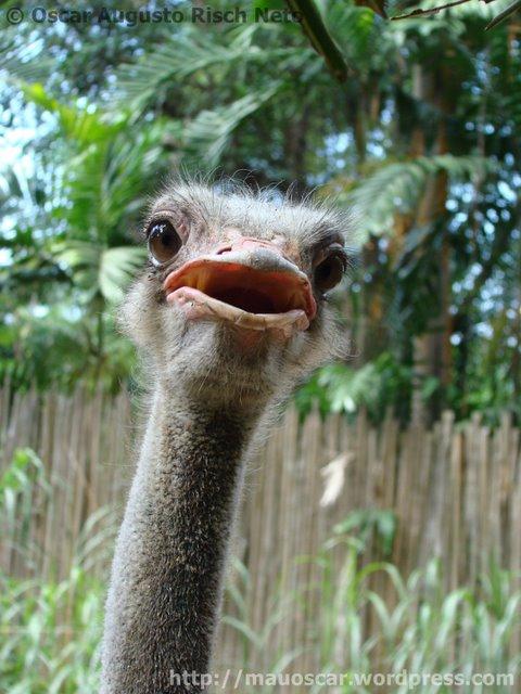Jurong BirdPark  Avestruz