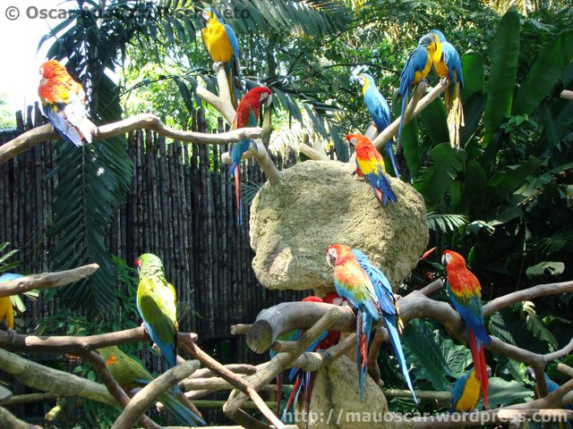 Jurong BirdPark  Entrada