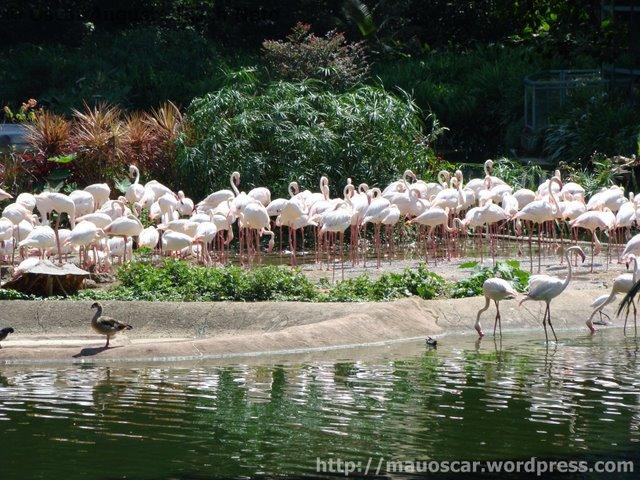 Jurong BirdPark  Flamingos