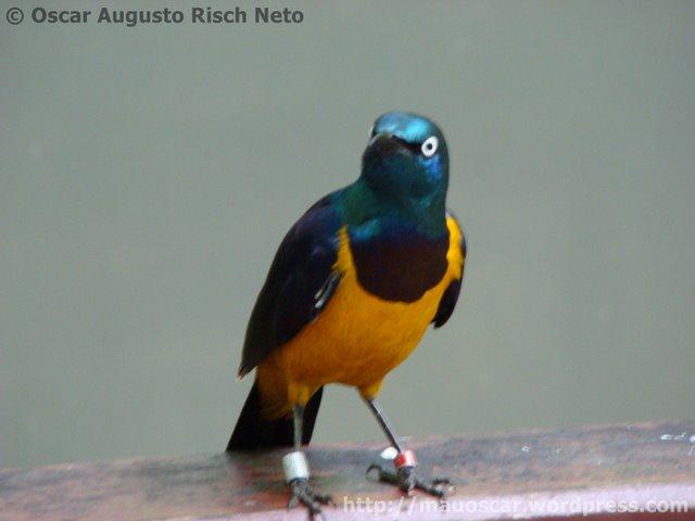 Jurong BirdPark  Lindo