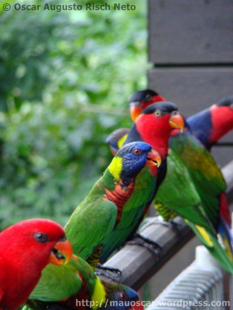 Jurong BirdPark  Lorries