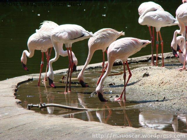Jurong BirdPark  +