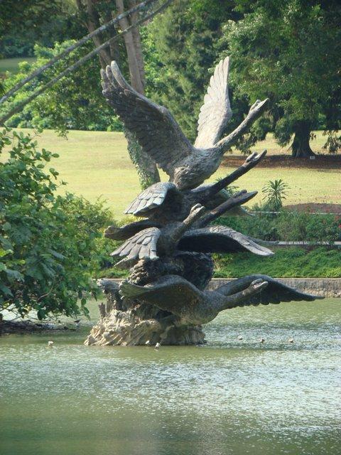 Lago dos Cisnes Singapura