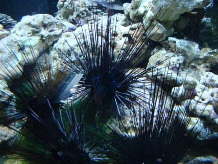 Ourico do mar