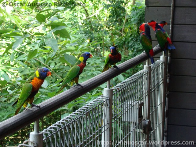 Passarinhos Jurong BirdPark