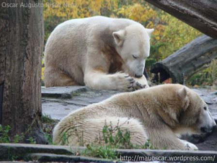 Zoo Berlin - Knut e Giovanna